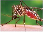 CDC Increases Zika Virus  Warning in Arkansas