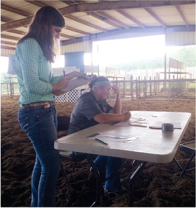 4-H District Horse Show