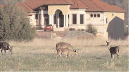 Apply for Arkansas's urban archery deer hunts
